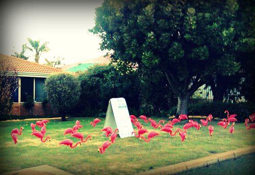 G&g_flamingoes